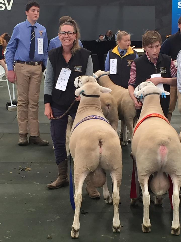 1st place tag no 359 White Suffolk Ram June Drop at the Royal Melbourne Show